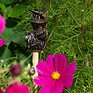 Antique Bronze Bee on a Thistle Cane Companion