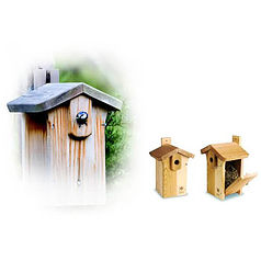 Cedar Classic Bird Nest Box