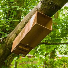 Tawny Owl Nest Tube box